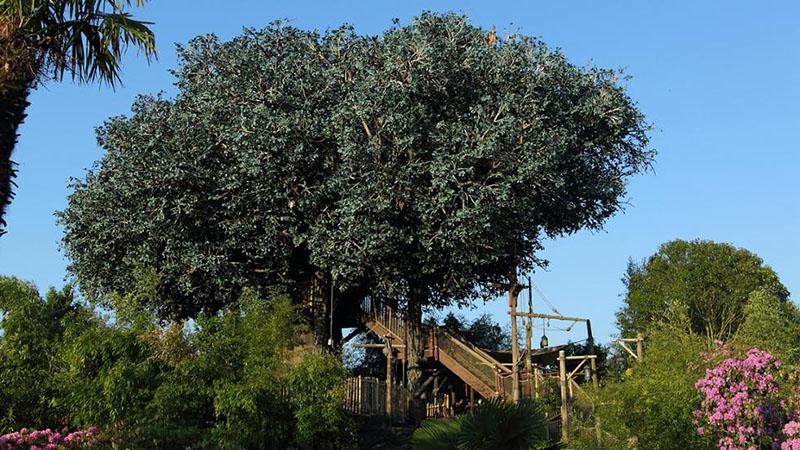 cabane dans les arbres Disneyland Paris